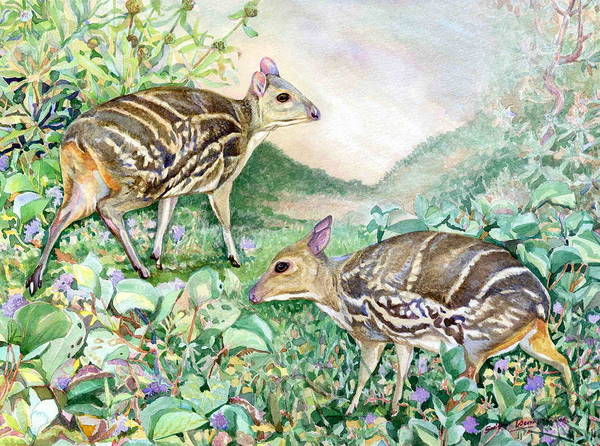 Wildlife Art Art Print featuring the painting Yello-striped Mouse Deer by Sasitha Weerasinghe