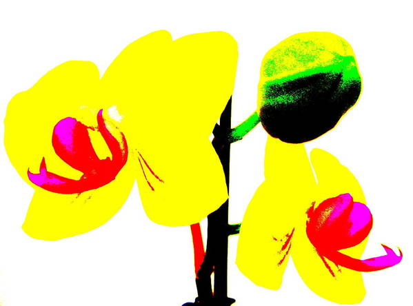 Yellow Orchids Abstract Art Print featuring the photograph Yellow Orchids Abstract by Beth Akerman