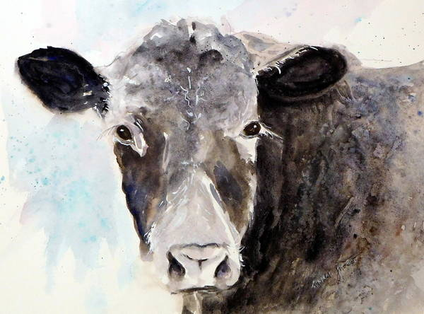 Young Angus Cattle Art Print featuring the painting Young Bruno - Mud Face by Anna Jacke