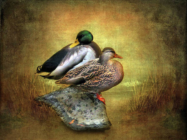 Ducks Art Print featuring the photograph Shoreline by Jessica Jenney