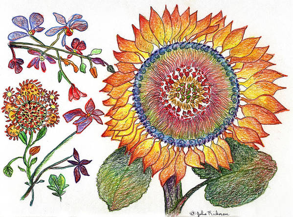 Sunflower Nature Flowers Drawing Julie Richman Art Print featuring the painting Botanical Flower-46 Sunflower Drawing by Julie Richman
