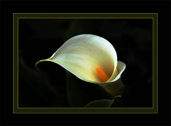 Flower Art Print featuring the photograph Lily by Richard Gordon