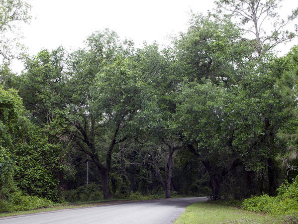 Wildlife Art Print featuring the photograph Road In The Woods by William Ragan