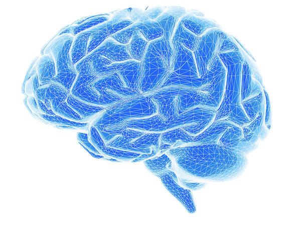 Brain Art Print featuring the photograph Brain by Pasieka