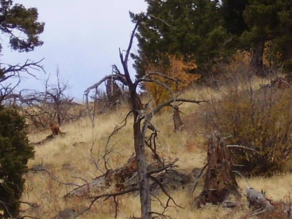 Trees Art Print featuring the photograph Montana Landscape by Yvette Pichette