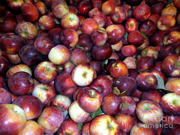 Janine Riley Print featuring the photograph Apples by Janine Riley