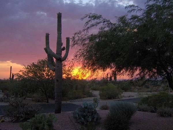 Sunsets Art Print featuring the photograph Arizona Sunset by Catherine Swerediuk