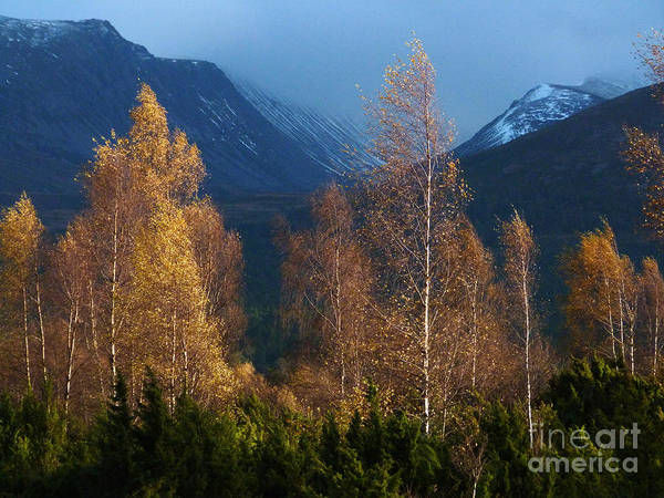 Autumn Art Print featuring the photograph Autumn Into Winter - Cairngorm Mountains by Phil Banks