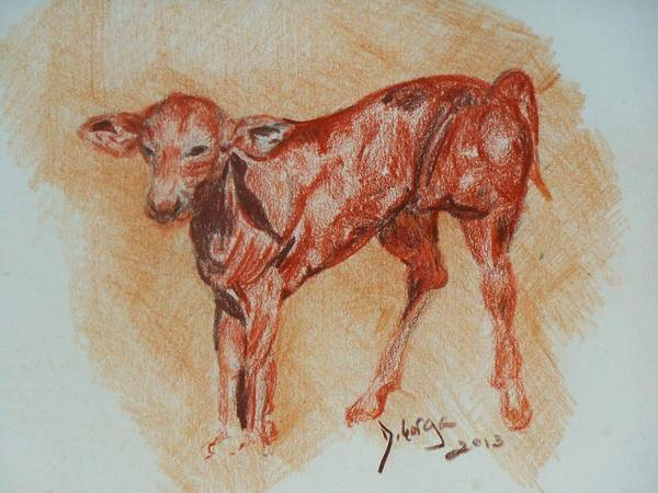 Baby Animals Art Print featuring the drawing Baby Calf by Deborah Gorga