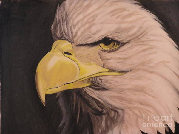 Pastel Drawings Art Print featuring the pastel Bald Eagle by Wil Golden