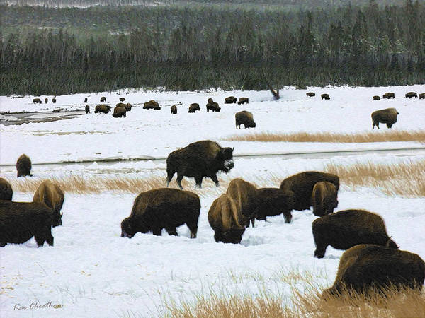 Wild Bison Art Print featuring the digital art Bison Cows Browsing by Kae Cheatham