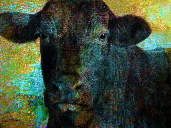 Cow Art Print featuring the mixed media Black Angus by Ann Powell