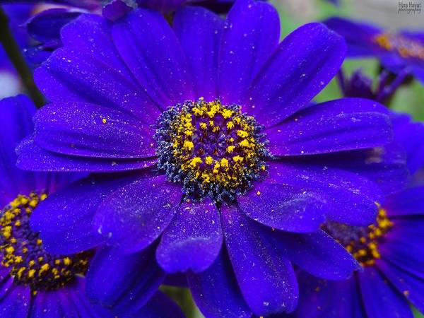 Flowers Art Print featuring the photograph Blue And Bright by Rumesa Saddozai