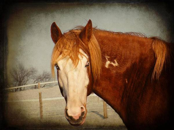 Animal Art Print featuring the photograph Blue Eyed Paint by Davandra Cribbie