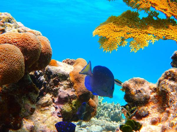 Water Art Print featuring the photograph Blue Tang by Michael Urbain