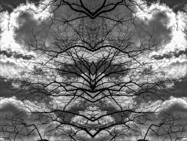 Branches And Clouds Mirrored Art Print featuring the photograph Branches And Clouds Mirrored by Robert Ullmann