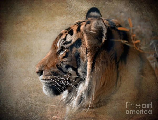 Tiger Art Print featuring the photograph Burning Bright by Betty LaRue