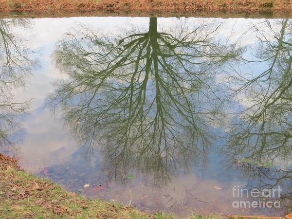 Tree Art Print featuring the photograph C And O Canal Tree Reflection by Rrrose Pix