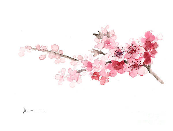 Cherry Blossom Art Print Watercolor Painting Art Print By