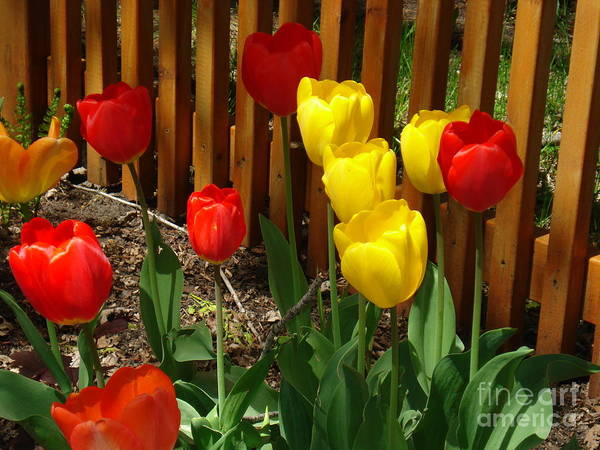 Flowers Art Print featuring the photograph Chicago In The Spring by Linda De La Rosa