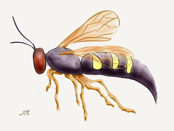 Wasp.insect Print featuring the digital art Cicada Killer Wasp by Stacy C Bottoms