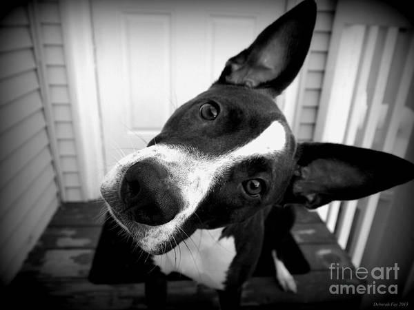 Dog Photos Art Print featuring the photograph Curious Abby by Deborah Fay