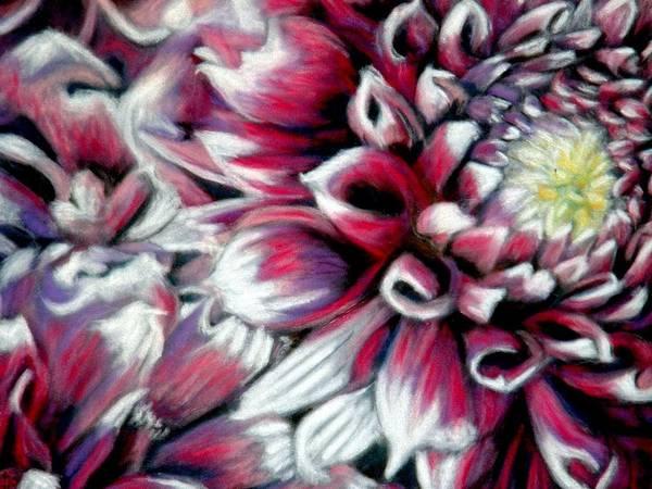 Dahlias Art Print featuring the pastel Dahlias In Pastel by Antonia Citrino