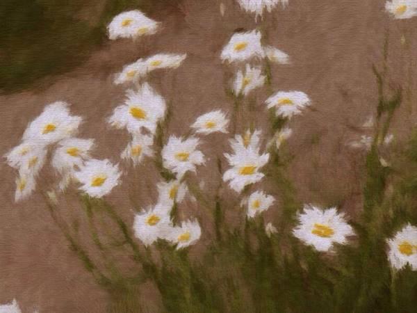 Wild Art Print featuring the photograph Daisy by Jason Cupp