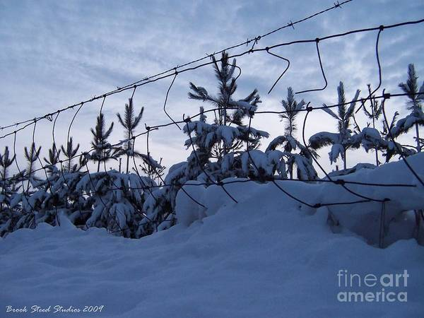Winter Art Print featuring the photograph Don't Fence Me In by Brook Steed