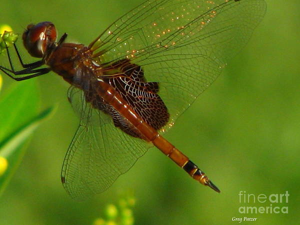 Art For The Wall...patzer Photographydragonfly Art Print featuring the photograph Dragonfly Art 2 by Greg Patzer