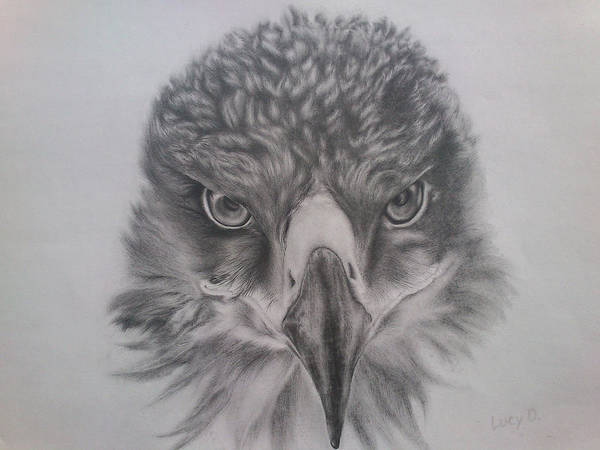 Eagle Art Print featuring the drawing Eagle by Lucy D