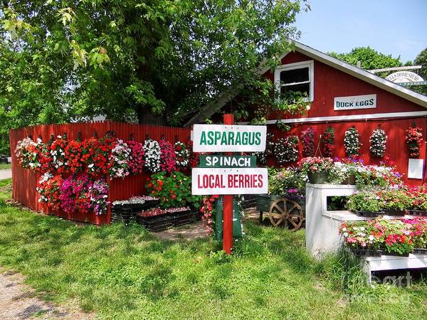Farmstand Art Print featuring the photograph East End Farmstand by Ed Weidman