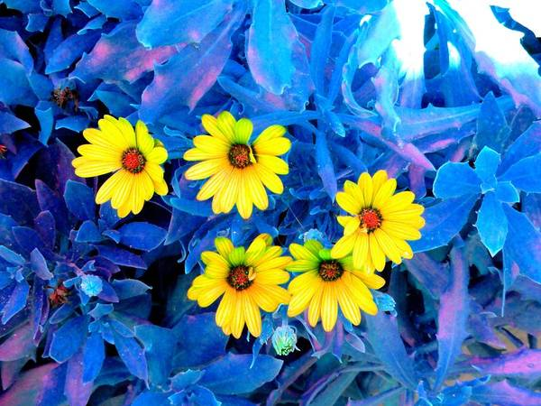 Flowers Art Print featuring the photograph Enhanced by Cyndi Cates