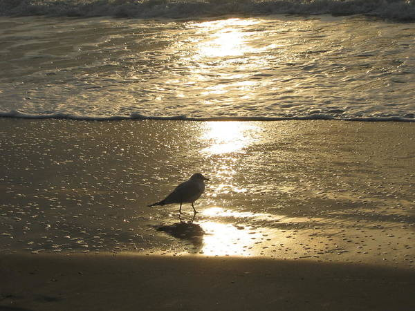 Beach Art Print featuring the photograph Evening Stroll For One by Judith Morris