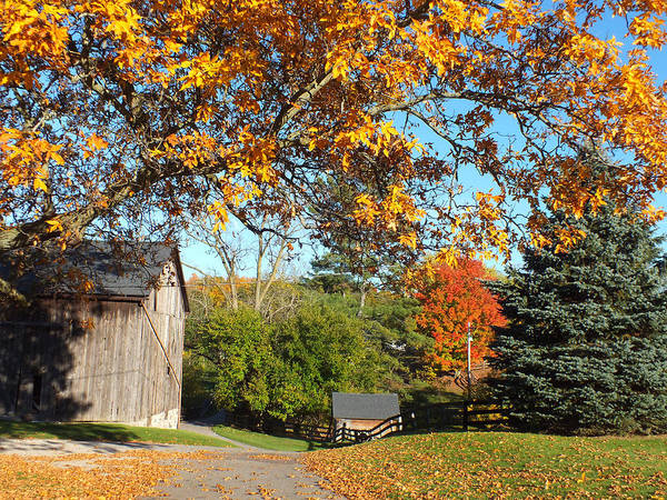 Barn Art Print featuring the photograph Fall Color by Becky Bunting