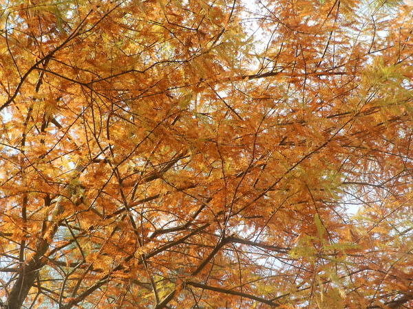Orange Art Print featuring the painting Fall Foilage by Ione Hedges