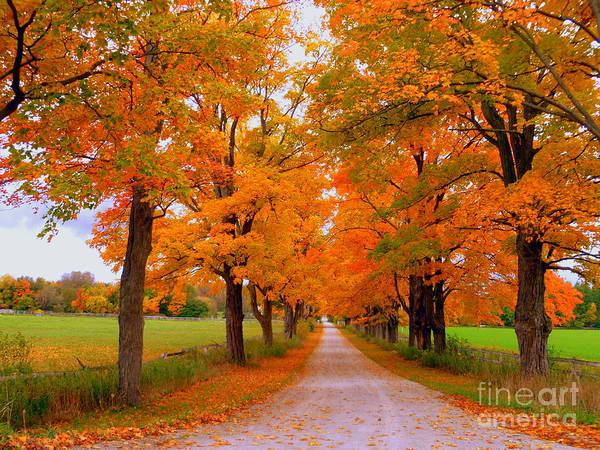 Autumn Photography Art Print featuring the photograph Falling For Romance by Lingfai Leung