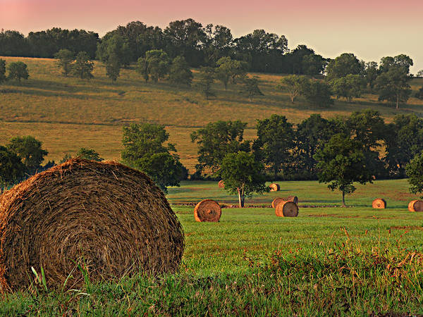 Bail Art Print featuring the photograph Field Of Hay by Steven Michael