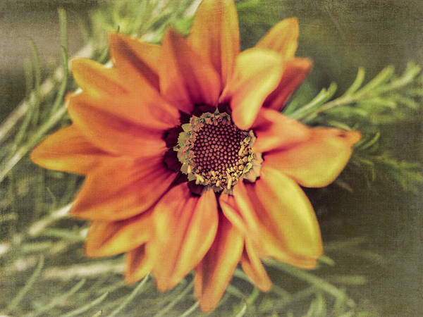 Flower Beauty Art Print featuring the photograph Flower Beauty I by Marco Oliveira