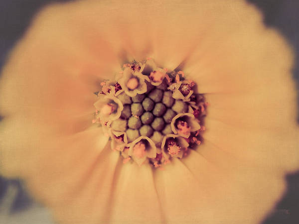 Flower Beauty Art Print featuring the photograph Flower Beauty IIi by Marco Oliveira