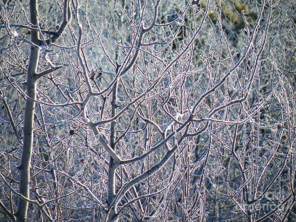 Brian Boyle Art Print featuring the photograph Forests Of Frost by Brian Boyle