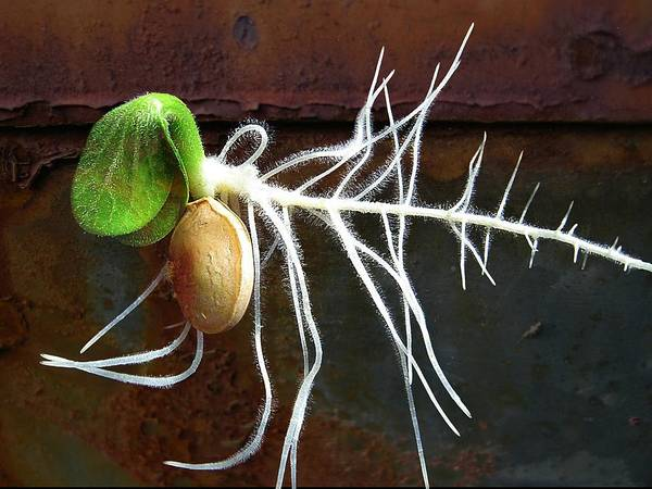 Seeds Art Print featuring the photograph Free To Be by Shirley Sirois