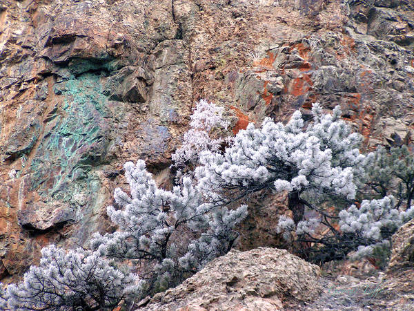 Cooper Rock Tree Frost Boulder Colorado Rock Mountains Winter Colorful Rocks Art Print featuring the photograph Frosted Trees by George Tuffy
