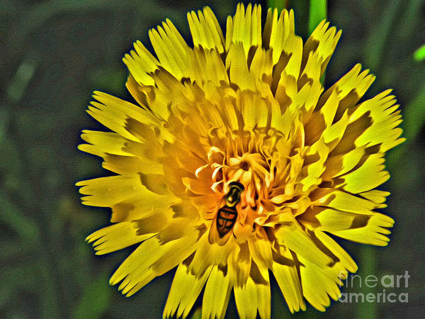 Gather Art Print featuring the photograph Gathering Nectar by Scott Hervieux