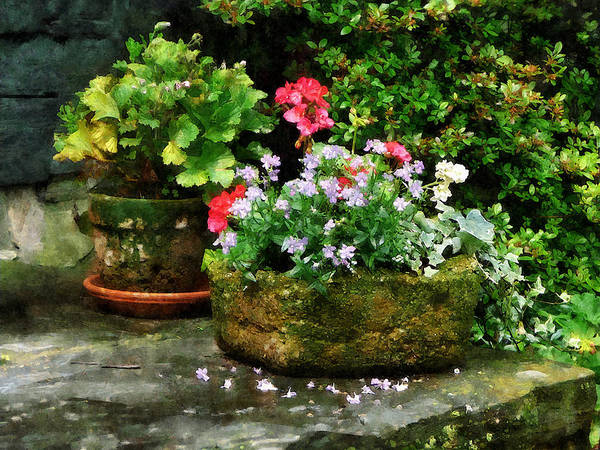 Flower Art Print featuring the photograph Geraniums And Lavender Flowers On Stone Steps by Susan Savad
