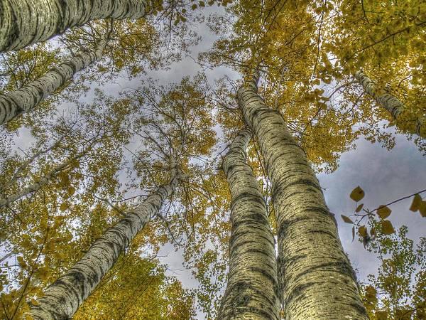 Popular Art Print featuring the photograph Golden Trees Summer by Linda Rich
