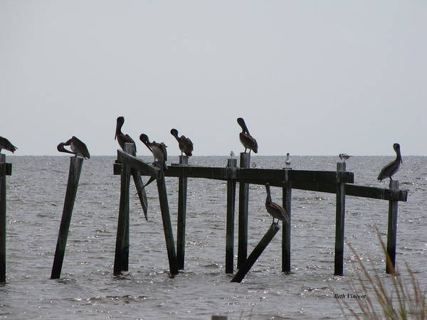 Pelicans Art Print featuring the photograph Hanging Out With Friends by Beth Vincent