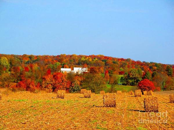 Quaker Art Print featuring the photograph Hay Bales In A Quaker Fall by Matthew Peek