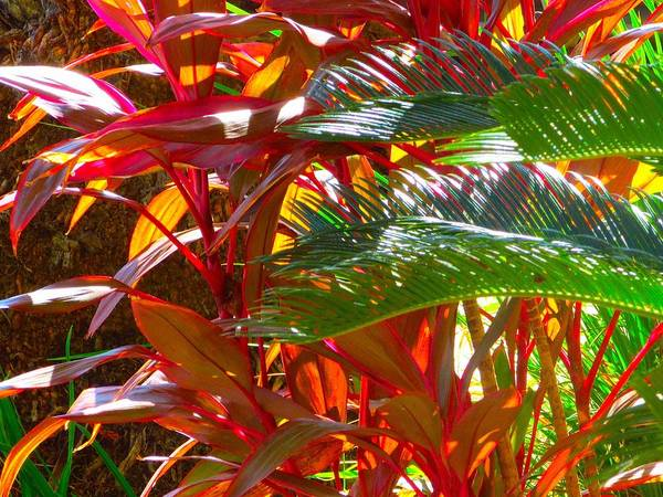 Landscape Plants Art Print featuring the photograph Highlights by Gayle Price Thomas