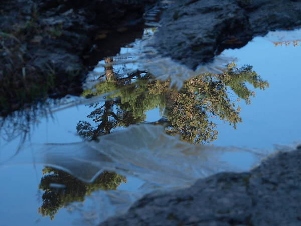 Jim Art Print featuring the photograph Icy Evergreen Reflection by James Peterson